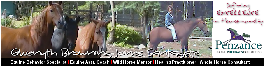 Penzance Equine Integrative Solutions